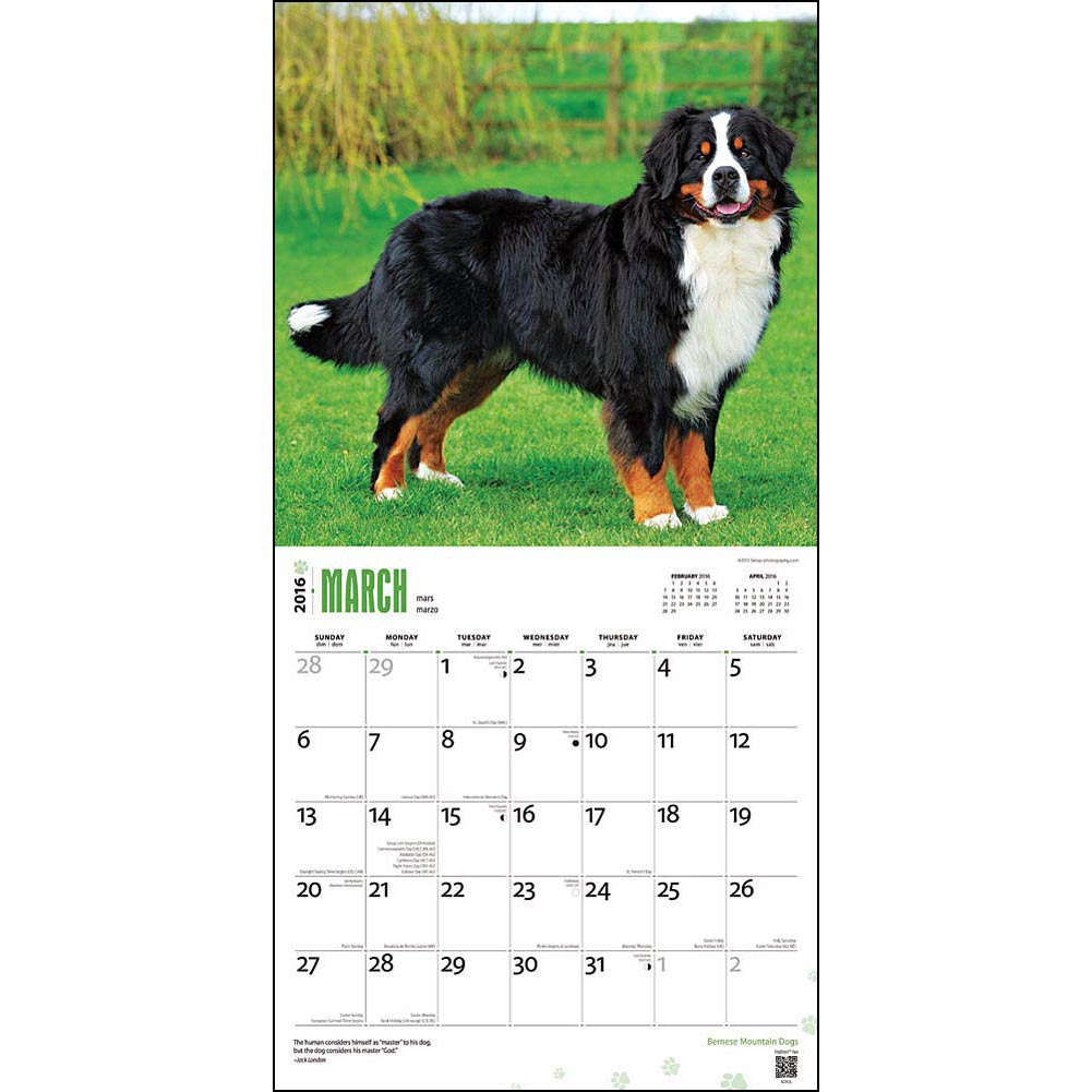 hundekalender wandkalender 2016 berner sennenhund. Black Bedroom Furniture Sets. Home Design Ideas