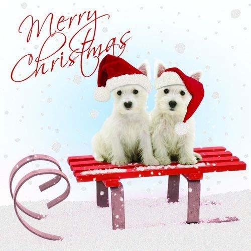 otterhouse weihnachtskarte westie west highland terrier. Black Bedroom Furniture Sets. Home Design Ideas