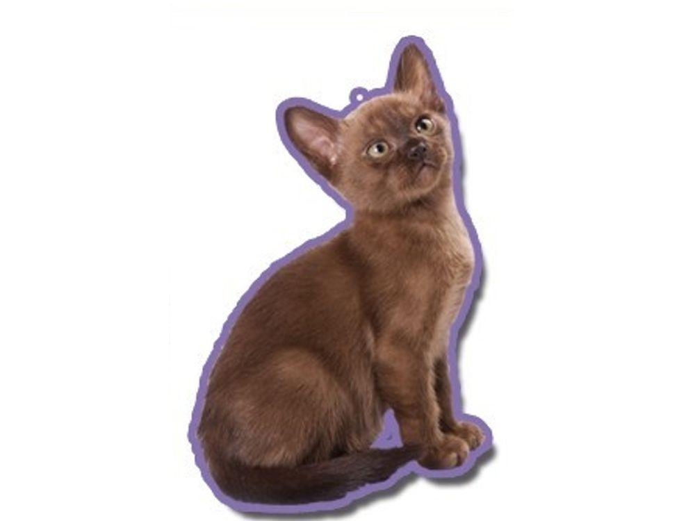duftbaum wunderbaum burmese katze tierisch tolle geschenke. Black Bedroom Furniture Sets. Home Design Ideas