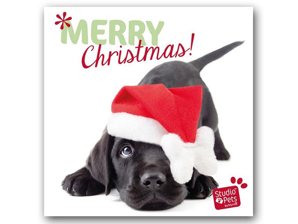 myrna weihnachtskarte hund labrador welpe tierisch. Black Bedroom Furniture Sets. Home Design Ideas