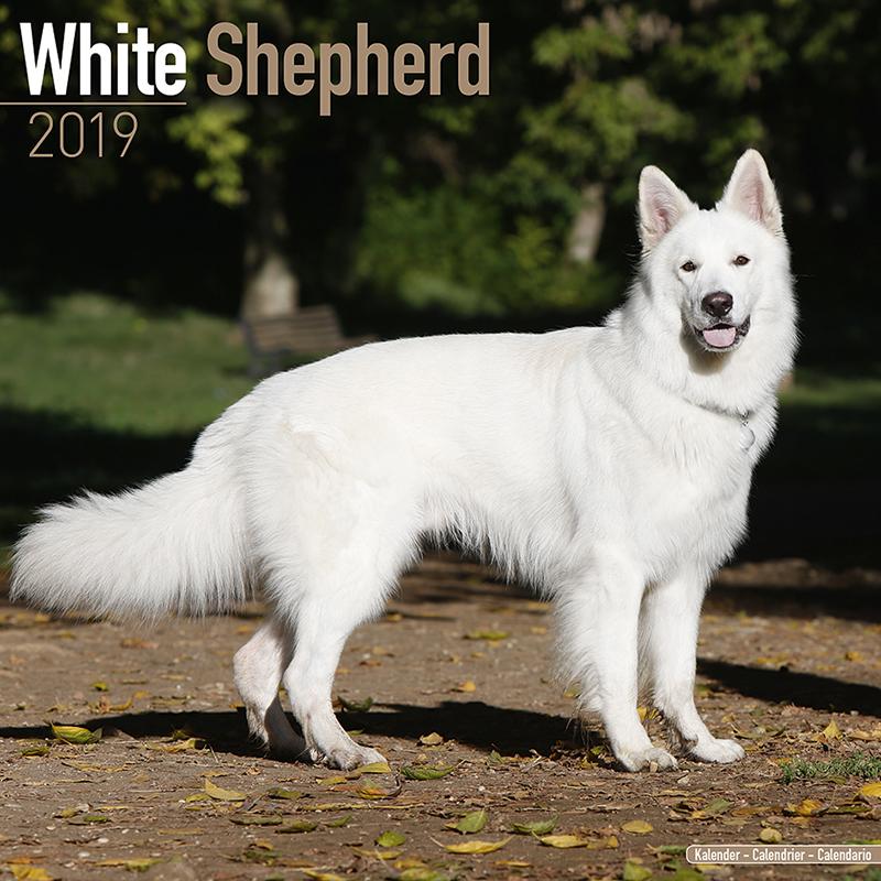 Weißer Schäferhund Hundekalender 2019 By Avonside