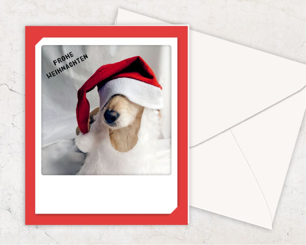 pickmotion karte frohe weihnachten 4 pfoten tierisch. Black Bedroom Furniture Sets. Home Design Ideas