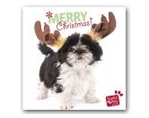 WeihnachtenMyrna Weihnachtskarte: Shih Tzu