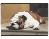 Tierische FußmattenDesigner Fußmatte: Bulldogge