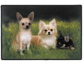Tierische FußmattenDesigner Fußmatte: Chihuahuas