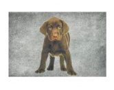 Hunderasse Fan KollektionLabrador Fan KollektionHunde Designer Fußmatte / Küchenmatte: Labrador chocolate Welpe