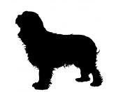 Bekleidung & AccessoiresSchals für TierfreundeKreidetafel Hunderasse: Cocker Spaniel 4
