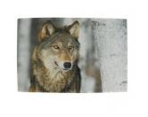 Tierische FußmattenHunde Designer Fußmatte / Küchenmatte: Wolf