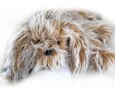 Spielzeuge für HundeMars & More kuscheliger Plüsch Hund: Jimmy