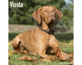 AusstellungszubehörHundeausstellungs-ClipsVizsla - Hundekalender 2021 by Avonside