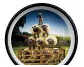 Wasser- & Futternäpfe für Hunde & KatzenTrixie Shaun das Schaf Napf Shauns Herde 800 ml
