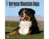 BrownTrout Hunde Kalender 2018Browntrout Hunde Wandkalender 2018: Bernese Mountain Dogs - Berner Sennenhund