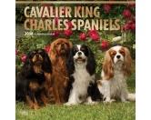 BrownTrout Hunde Kalender 2018Browntrout Hunde Wandkalender 2018: Cavalier King Charles Spaniel