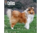 BrownTrout Hunde Kalender 2018Browntrout Hunde Wandkalender 2018: Collie