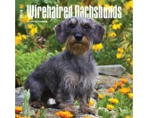 BrownTrout Hunde Kalender 2018Browntrout Hunde Wandkalender 2018: Dachshund Wiredhaire - Dackel Rauhaar