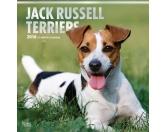 BrownTrout Hunde Kalender 2018Browntrout Hunde Wandkalender 2018: Jack Russell Terrier