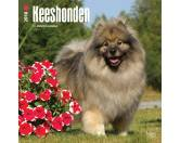 BrownTrout Hunde Kalender 2018Browntrout Hunde Wandkalender 2018: Keeshond - Wolfsspitz