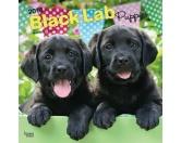 BrownTrout Hunde Kalender 2018Browntrout Hunde Wandkalender 2018: Labrador Retriever schwarz Puppies - Welpen