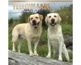 BrownTrout Hunde Kalender 2018Browntrout Hunde Wandkalender 2018: Labrador Retriever yellow