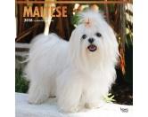 BrownTrout Hunde Kalender 2018Browntrout Hunde Wandkalender 2018: Malteser