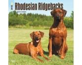 BrownTrout Hunde Kalender 2018Browntrout Hunde Wandkalender 2018: Rhodesian Ridgeback