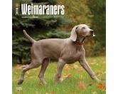 BrownTrout Hunde Kalender 2018Browntrout Hunde Wandkalender 2018: Weimaraner