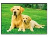 Tierische FußmattenFoto Design Hunde Fußmatte: Labrador yellow