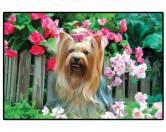Tierische FußmattenFoto Design Hunde Fußmatte: Yorkshire Terrier