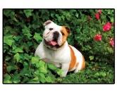 Tierische FußmattenFoto Design Hunde Fußmatte: Bulldogge