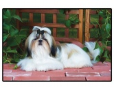 Bekleidung & AccessoiresHausschuhe & PantoffelnFoto Design Hunde Fußmatte: Shih Tzu