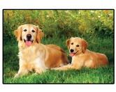 Tierische FußmattenFoto Design Hunde Fußmatte: Golden Retriever