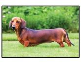 Bekleidung & AccessoiresHausschuhe & PantoffelnFoto Design Hunde Fußmatte: Dackel - Dachshund