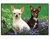 Tierische FußmattenFoto Design Hunde Fußmatte: Chihuahua