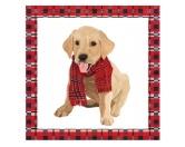 WeihnachtenPapier-Servietten: Hund - Monty Labrador 20 Stck 33 x 33 cm