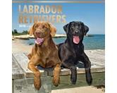 BrownTrout Hunde Kalender 2018Browntrout Hunde Wandkalender 2018: Labrador Retriever