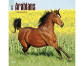Browntrout Tier Wandkalender 2017: Arabians - Pferde