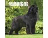 BrownTrout Hunde Kalender 2018Browntrout Hunde Wandkalender 2018: Newfoundlands - Neufundländer