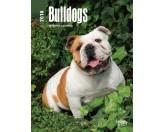 Browntrout Hunde Wochenplaner 2018: Bulldogs - Bulldogge