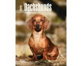 Tiermotiv TassenTassen HunderassenBrowntrout Hunde Wochenplaner 2018: Dachshund - Dackel