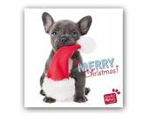 WeihnachtenMyrna Weihnachtskarte: Französische Bulldogge Welpe