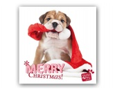 WeihnachtenMyrna Weihnachtskarte: Hab den Weihnachtsmann erwischt - Bulldogge Welpe