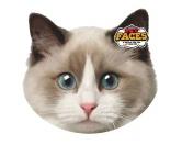 Pet Faces Kissen Katze: Ragdoll Cat -50 cm-