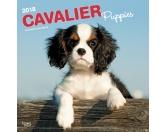 NeuheitenBrowntrout Hunde Wandkalender 2018: Cavalier King Charles Spaniel Puppies