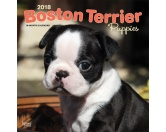 Browntrout Hunde Wandkalender 2018: Boston Terrier Puppies