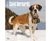 NeuheitenBrowntrout Hunde Wandkalender 2018: Saint Bernards - Bernhadiner