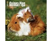 NeuheitenBrowntrout Tier Wandkalender 2018: Guinea Pigs- Meerschweinchen