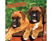 NeuheitenBrowntrout Hunde Wandkalender 2018: Boxer Welpen