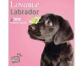 Labrador Welpen Studio - Hundekalender 2018 by BrownTrout