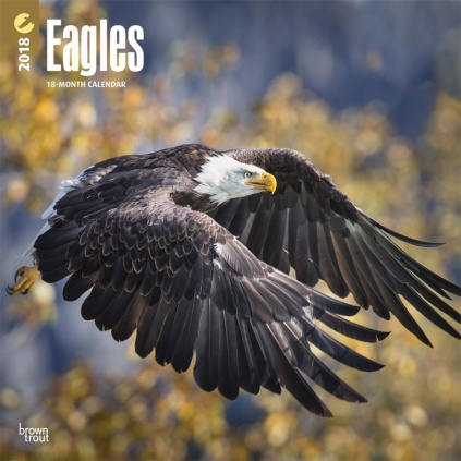 BrownTrout Tier Kalender 2018 Browntrout Tier Wandkalender 2018: Eagles - Adler