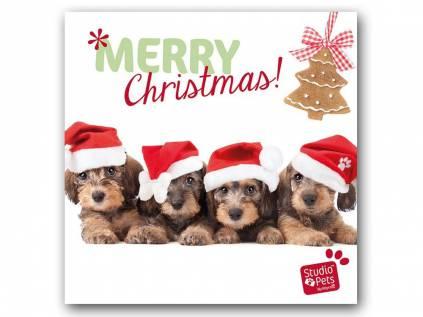 myrna weihnachtskarte dackel quartett tierisch tolle geschenke. Black Bedroom Furniture Sets. Home Design Ideas